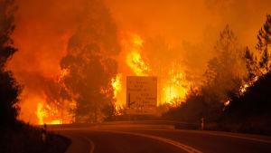 Skogsbrand i Leiriadistriktet i Portugal.