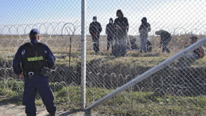Flyktingar på serbiska sidan av stängslet mellan Ungern och Serbien.
