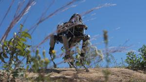 Robothund utvecklad av företaget Boston Dynamics.