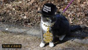 Katt med fejkade guldsmycken.