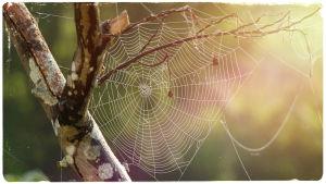 Kuvituskuva: hämähäkinverkko.