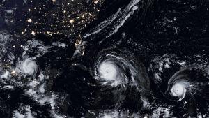 Orkanerna Katia (vänster), Irma (mitten) och Jose.