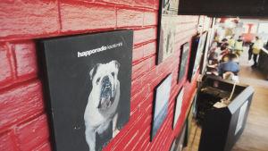 Rödmålad tegelvägg med skivkonvolut, i förgrunden en svart skiva med vit bulldogg och texten Happoradio: kaunis minä.