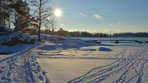 Vinterlandskap med snö och sol
