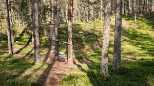 Kahden puun väliin ripustettu tynnyri, soitin nimeltä tynnyrihärkä, Soivassa Metsässä Suomussalmella.