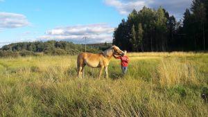 finnhäst med flicka på betet