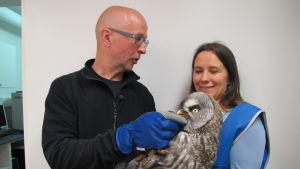 Olli Vuori ja Minna Pyykkö lapinpöllön kanssa eläinlääkärin odotustilassa