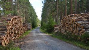 Avverkning i Västnyland.