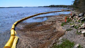 Kloakvatten har läckt ut i havet i Hammars i Borgå våren 2018