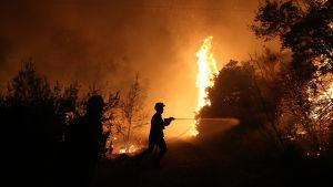 Brandmän kämpar mot elden nära byn Kalamos som ligger 50 kilometer från Aten