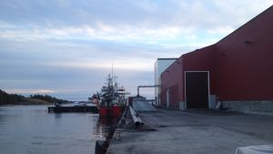 Trålare lossar last vid fiskmjölsfabriken i Kasnäs.