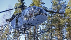 Helikopter går ner för att fylla på gödsel som sen sprids över skog i Seljes i Nedervetil.