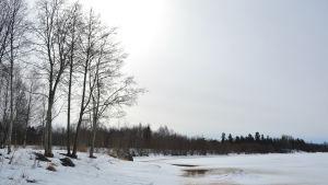 Vårvinterbild av Kyro älv.