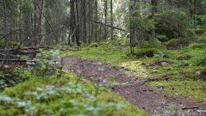 Svinö naturstig är cirka 1,5 kikometer lång.
