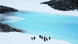 Pingviner på Antarktis