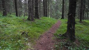 Metsäpolku.