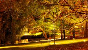 Yksinäinen tyhjä puistonpenkki koskipistossa kelmeissä valoissa syksyllä, puun lehdet kellastuneet.