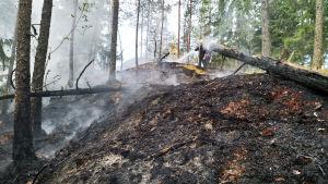 Brandmän släcker eldsvåda i skogen