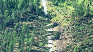 Avverkad skog fotograferat från luften.