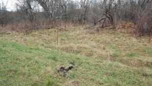 En grön gräsmatta med små bruna mullhögar.