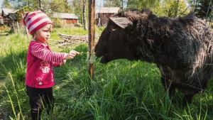 Pieni tyttö syöttää mustaa lammasta Södra Vallgrundissa.