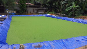Odling med mossbräknar i Indien.