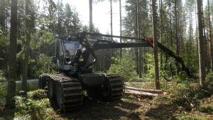 Skördare i skogarna i Purmo