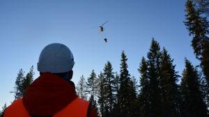 Thomas Åman på Skogsvårdsföreningen i Österbotten blickar upp mot helikoptern som gödslar.
