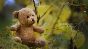 Ensam teddybjörn i naturen.