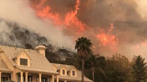 Flammor från en moteld som anlagts för att bekämpa en markbrand i Santa Barbara County.