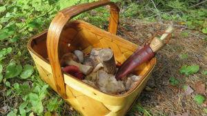 En rymlig korg och en svampkniv är något av ett måste för svamplockaren.