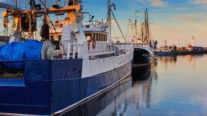 Fiskebåtar i en hamn i Ystad i Sverige.