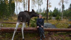 Markku Harju och älgen Mervi.