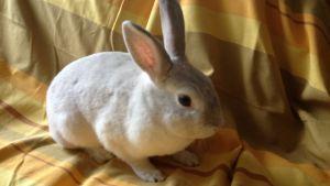 Vit kanin i soffa