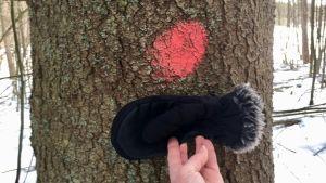 hand med handske framför träd med röd fläck.