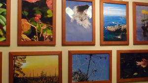En del av Tony Axbergs fotografier. Tony  pryder sina väggar med bland annat naturbilder.