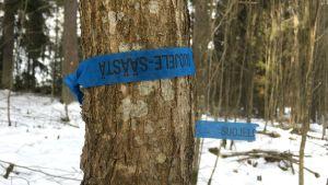 träd med blått band.