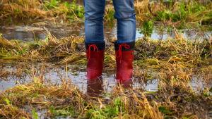 Ett par röda stövlar står i djupt vatten på en åker.