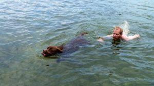 Labradoren Paavo simmar med sin husse.