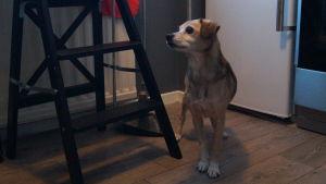 Emma Gäddnäs hund.
