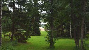Gräsmatta och träd. Mellan trädkronorna skymtar en badstrand.