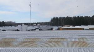 Ulf Erikssons pälsfarm i Socklot