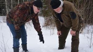 Två jägare i vinterskogen böjer sig ner för att titta på tassavtryck av varg i snön