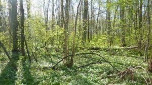 Ramsholmen gröna skrud.