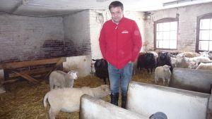 Anders Norrback står bland fåren