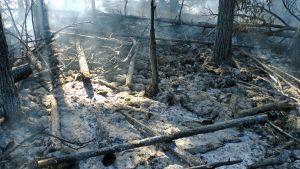 Bränningen kunde ha gått bättre, säger man från Forststyrelsen.