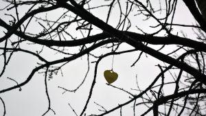 Reflex som hänger i ett träd