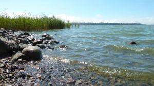 Havet, Munksnäs, juli 2014.