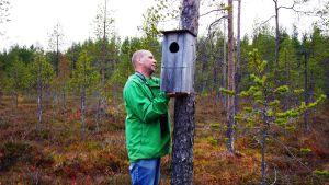 Uivelon pönttöä laitetaan puuhun