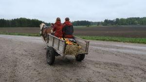 Häst och gammaldags hästkärra åker på en grusväg.